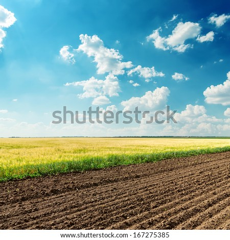 agriculture fields under deep blue cloudy sky - stock photo