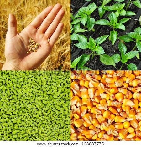 Agriculture, grain, corn. Farming collection. - stock photo