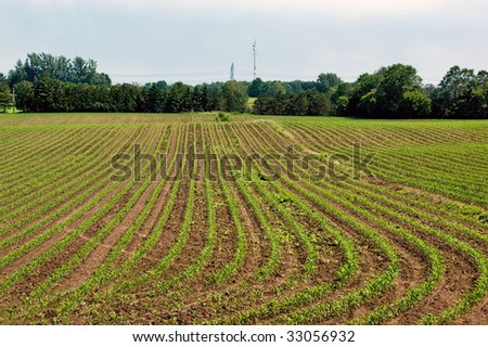 Agriculture: green cultivated  field