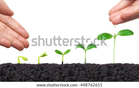 Agriculture. Hand of a farmer nurturing young baby plants growing in germination sequence on fertile soil with natural green background - stock photo