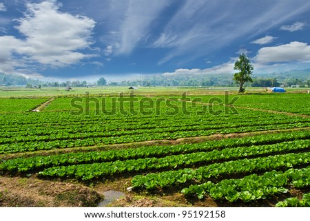 agriculture in Northern of Thailand - stock photo
