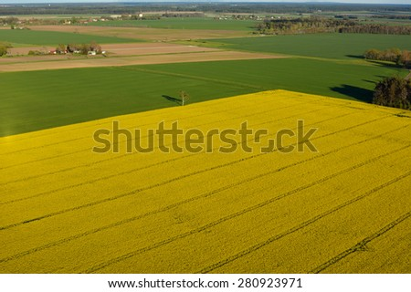 Agriculture land with flowering Canola flowers on the island of Gotland in Sweden, aerial view