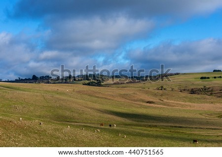 Agriculture landscape of cattle paddock. Blue sky and green meadow with sheep and cows grazing. Copy space - stock photo