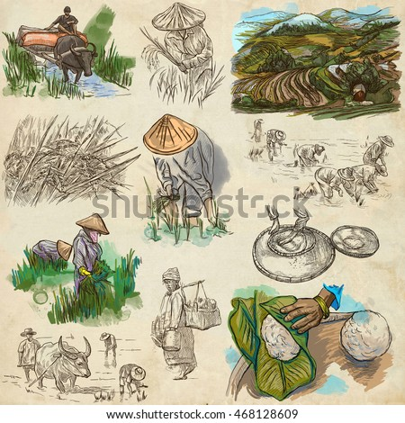 Agriculture - Life of a farmer. RICE CROP. Collection of an hand drawing illustrations. Set of freehand sketches. Colored. Line art technique. Drawing on white.