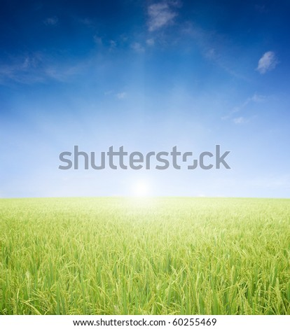 agriculture paddy field early in the morning with sun light - stock photo