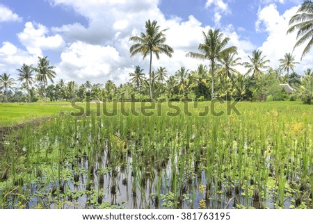 Agriculture paddy hill with cloudy skies - stock photo