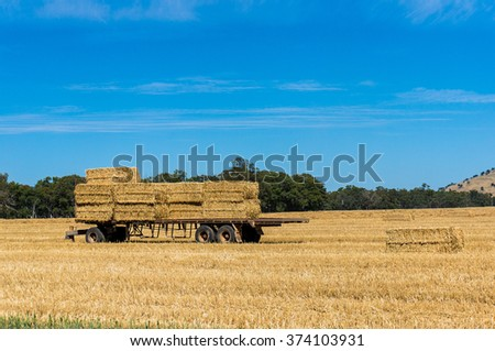 Agriculture scene. Farmers trailer loaded with haystacks, hay bales on a golden field against Australian rural landscape and blue sky on the background. Copy space. - stock photo