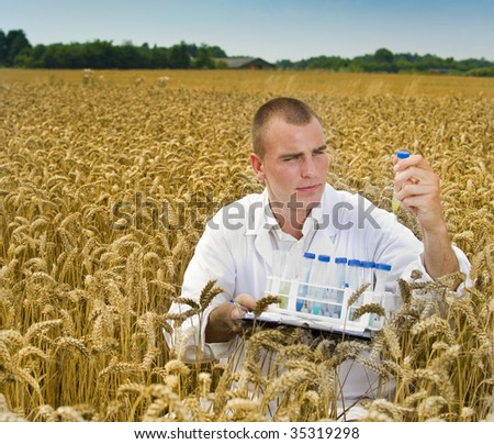 Agriculture scientist examining samples in rye field - stock photo