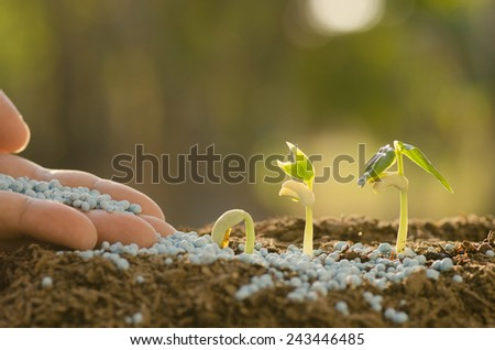 Agriculture, Seeding, Plant seed growing concept, Farmer hand giving fertilizer to young plant - stock photo