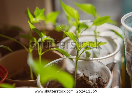 Agriculture, Seeding, Plant seed  growing concept  selective focus - stock photo