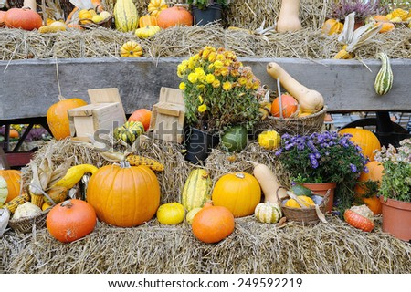 Agriculture set with fresh pumpkins on hay - stock photo
