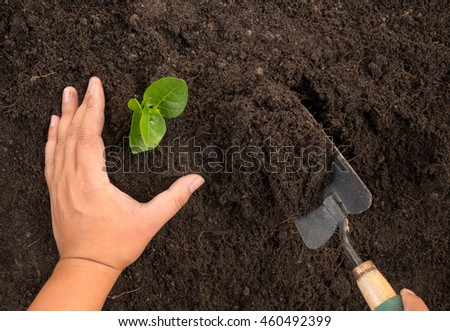 Agriculture,Soil,Plant,Seedling,Save Plant concept,Close up male hand planting and protected over black soil - stock photo