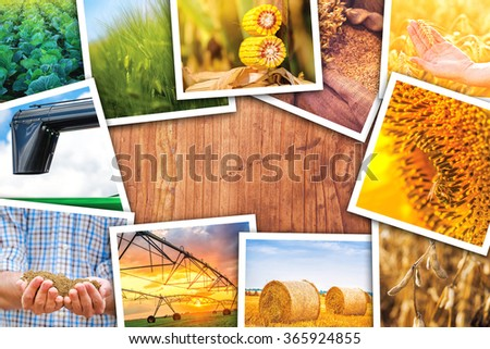 Agriculture themed collage of photos, stack of various crop and farming field pictures on wooden desk as copy space. - stock photo