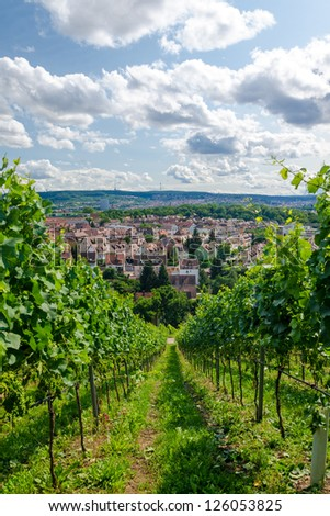 Agriculture vineyard landscape in the South of Germany - Stuttgart - stock photo