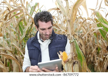 Agronomist analysing cereals with electronic tablet - stock photo