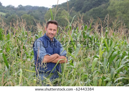 Agronomist analyzing cereals in corn field - stock photo