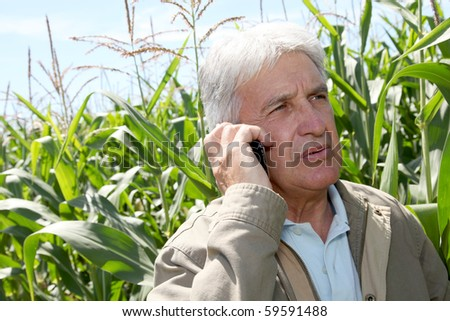 Agronomist analyzing corn field - stock photo