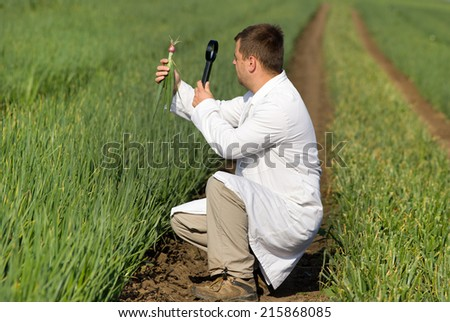 Agronomist in white coat looking through magnifier in onion - stock photo