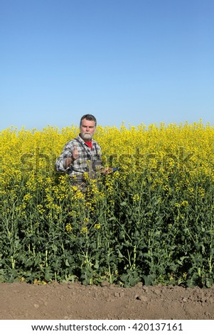Agronomist or farmer examine blooming canola field and gesturing, thumb up
