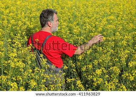 Agronomist or farmer examine blooming canola plant field, oil seed rape - stock photo