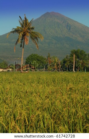 Agung and rice - stock photo