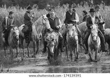 AIGUES-MORTES, FRANCE - OCTOBER 7, 2012 : Guardians cross a river in Aigues-Mortes. Guardians are mounted cattle herdsman in the Camargue delta in Provence, southern France
