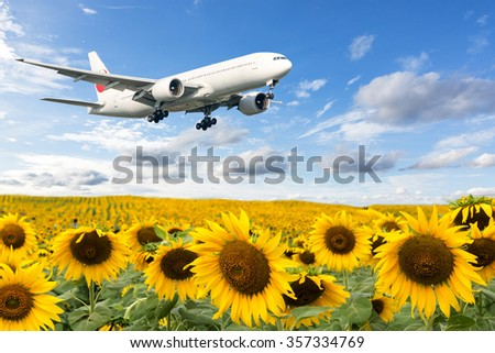 Airplane taking off over sunflowers - stock photo