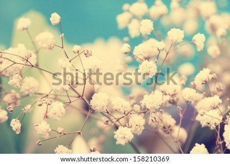 airy vintage small white flowers - stock photo