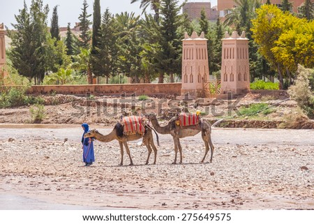 AIT BENHADDOU, MOROCCO, APRIL 10, 2015: Local man in blue clothes walks with his camels by the bed of river near one of the most extraordinary Kasbahs in Morocco - stock photo