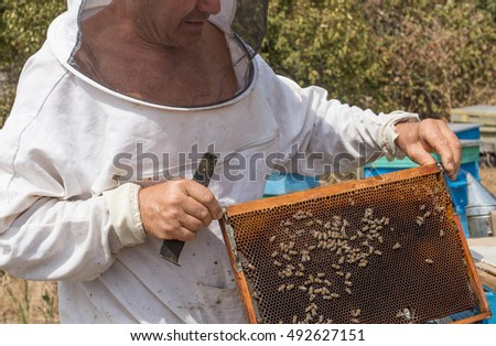 Ajtos - August 20: Beekeeper protective clothing and masks review hive with bees  on August 20, 2016, Aitos, Bulgaria