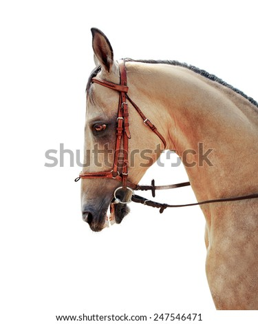 Akhal-Teke horse half-face on a white background - stock photo