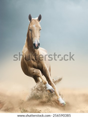 akhal-teke horse in desert - stock photo