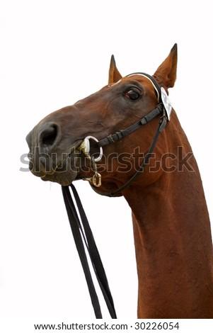 akhal-teke stallion - stock photo