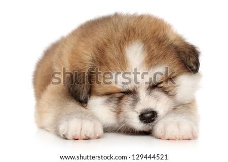 Akita-inu puppy sweetly sleeping on a white background - stock photo