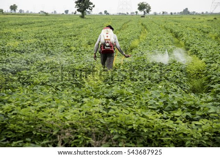 AKOLA, MAHARASHTRA, INDIA - 19 AUGUST 2016 : Unidentified Agricultural workers spraying pesticide in soybean fields. An Indian farming scene. Akola,Maharashtra, India
