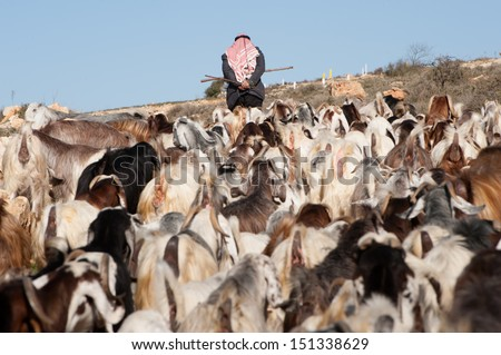 AL KHADER, PALESTINIAN TERRITORY - FEBRUARY 10: A Palestinian herder leads his flocks in the Ein El Qassis area of Al Khader village, West Bank, February 10, 2013. - stock photo