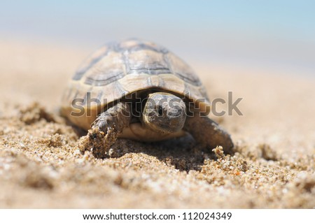alanya,turkey, beach, turtel - stock photo