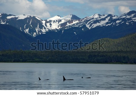 Alaska landscape with a family of Orca whales - stock photo