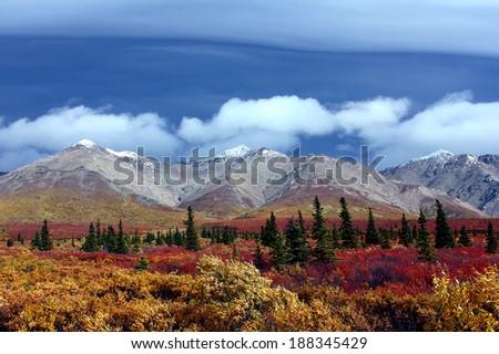 Alaska mountains and tundra Denali National Park - stock photo