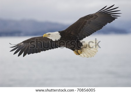 Alaskan Bald Eagle flying over water with mountains in background - stock photo