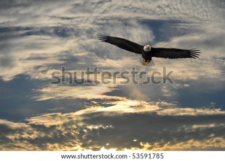 Alaskan Bald Eagle soaring against an Alaska sky