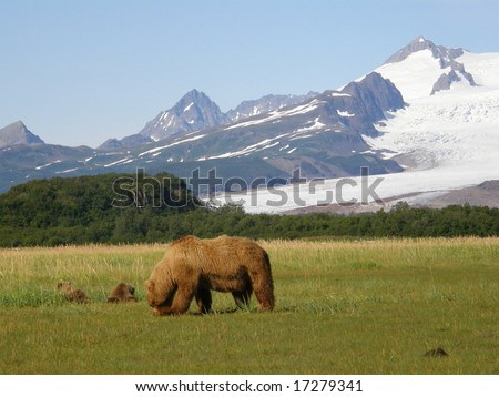 Alaskan brown bears, katmai - stock photo