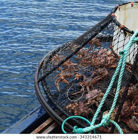 Alaskan Crab Caught in a Trap - stock photo