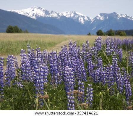 Alaskan landscape - stock photo