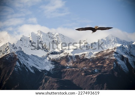 Alaskan mountain peaks dusted with snow with a flying bald eagle in fall. - stock photo