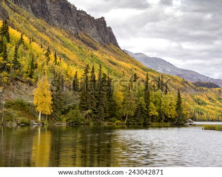 Alaskan Roadside Aspen  - stock photo