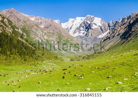 Alatau Plateau in Tian Shan mountains, Karakol, Kyrgyzstan, Central Asia - stock photo