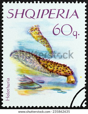 """ALBANIA - CIRCA 1966: A stamp printed in Albania from the """"Echinoderms """" issue shows Tube Holothurian (Holothuria tubulosa), circa 1966.  - stock photo"""