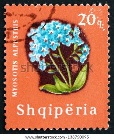 ALBANIA - CIRCA 1965: a stamp printed in the Albania shows Alpine Forget-me-not, Myosotis Alpestris, Herbaceous Perennial Plant, circa 1965 - stock photo
