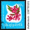ALBANIA - CIRCA 1965: a stamp printed in the Albania shows Oleander, Nerium Oleander, Flower, circa 1965 - stock photo